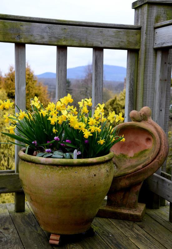 5200_flower-pot-3