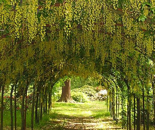 arley-arboretum-gardens-1-500-500