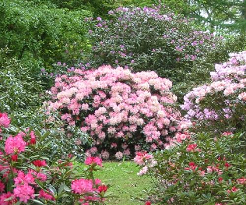 arley-arboretum-gardens-5-500-500